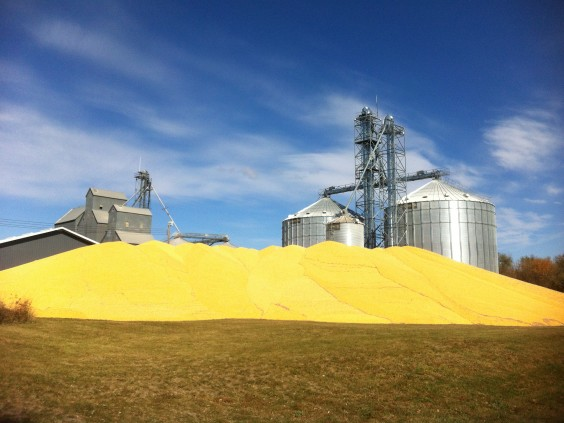 Corn was already piled up outside the Frederick Farmers Elevator on Oct. 6—well before corn harvest has even started in other years. A second pile has appeared next to the first one since this photo was taken. Photo by Heidi Marttila-Losure