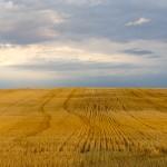 Field in South Dakota