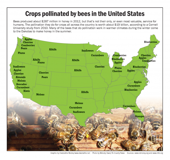 INFOGRAPHIC: Crops pollinated by bees in the United States