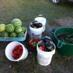 This photo is actually from our 2012 garden harvest--the children revolted and we planted no eggplant this year. But it give you an idea of how much help a farm garden can provide for a local food challenge. By Heidi Marttila-Losure