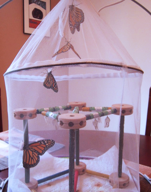 David LaRochelle of White Bear Lake, Minn., hatched out nine monarchs this spring in this enclosure made with netting and tinker toys. Courtesy photo