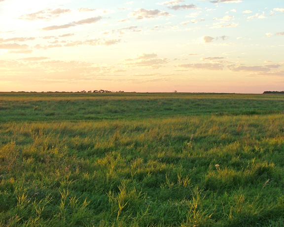 Decision time for farmers: To CRP or not to CRP?