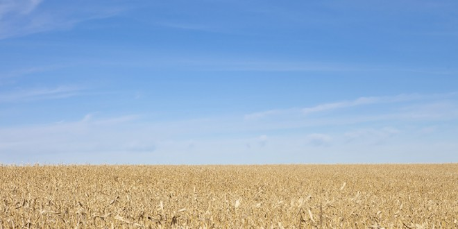 New corn varieties promise better yields in drought conditions