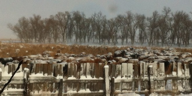 Weekend blizzard offers little moisture relief to farmers and ranchers