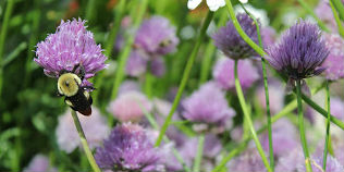 Toxicity of pesticides on pollinators must be minimized